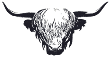 Ink drawing of the head of a Highland cow facing foward